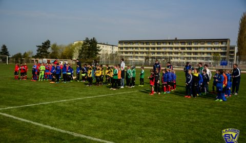 6. Sternchen-Cup